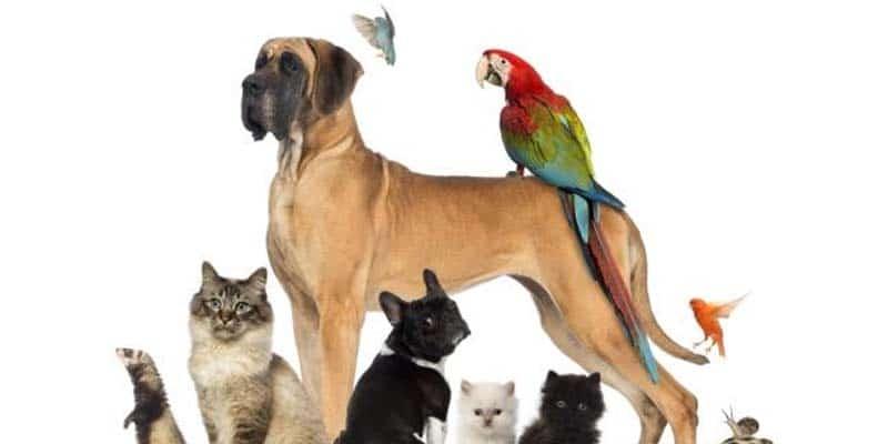 pharmacie des fontaines veterinaires