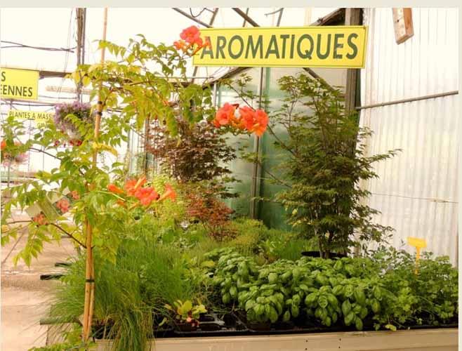jardin de pernes img 1
